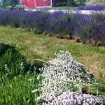Voices of Rural Women across American Heartland-12